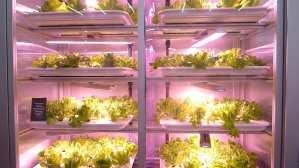 Good bank vertical farming Berlin