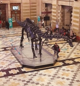 Dippy diplodocus Glasgow kelvingrove Museum and Art Gallery