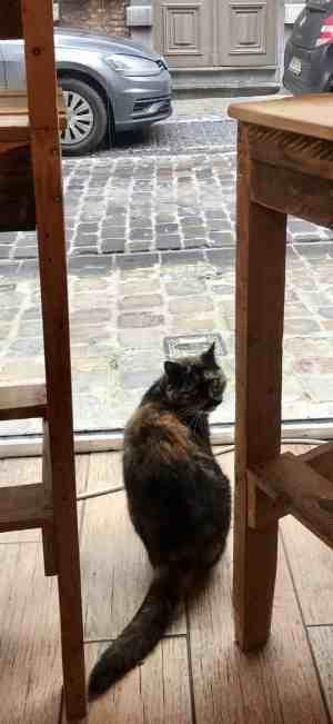 Chez Miss Miaouw Cat cafe
