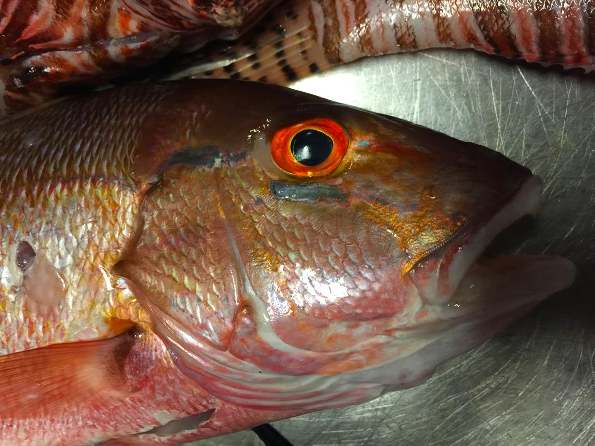 El Pescado En Puerto Rico Foodiesprcom