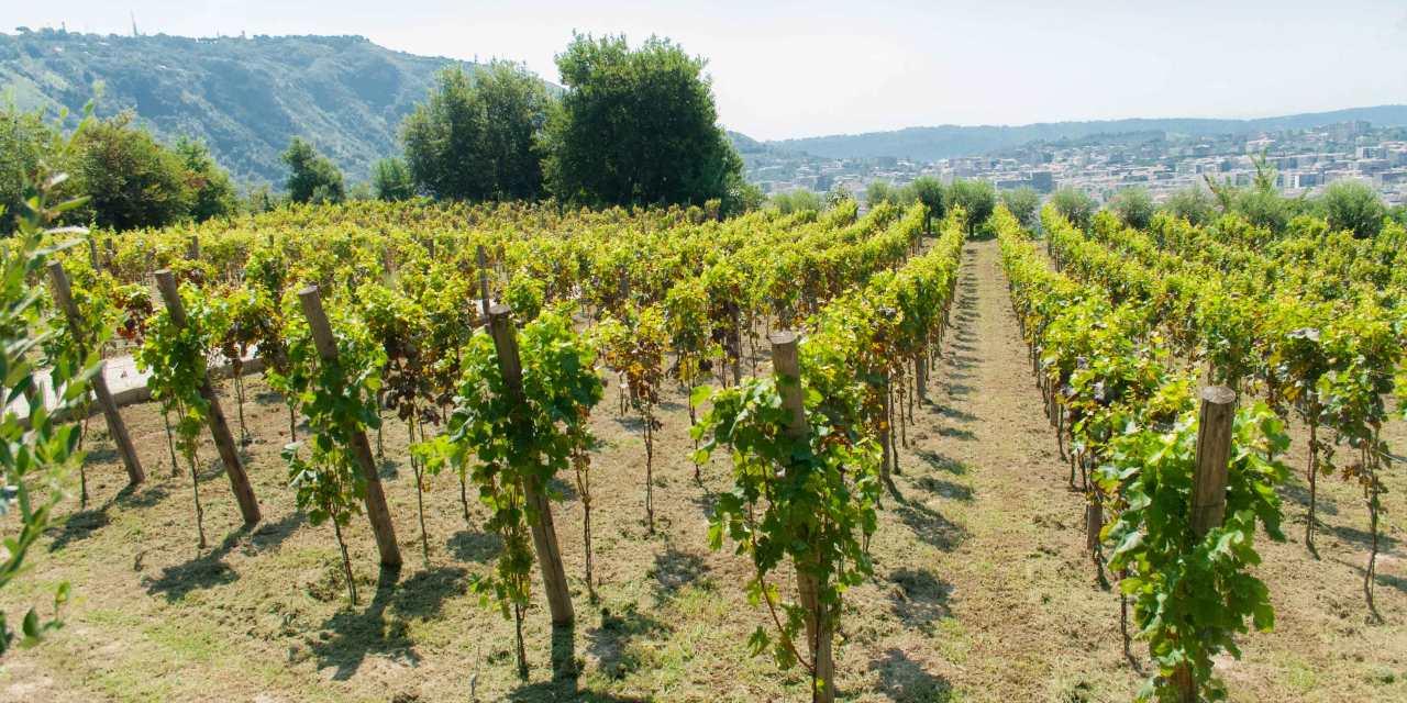 Guida ai vitigni d'Italia by Slow Food