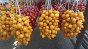 Pomodorini rossi e gialli del piennolo, produzione vesuviana