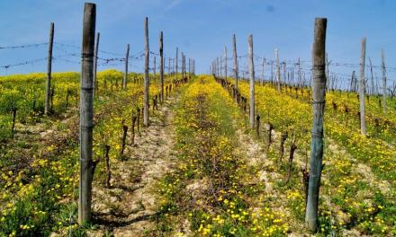 CANTINE A NORD OVEST 2017. Tour enogastronomico firmato Slow Food