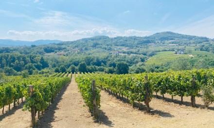 Visita all'Azienda Vinicola Donnachiara
