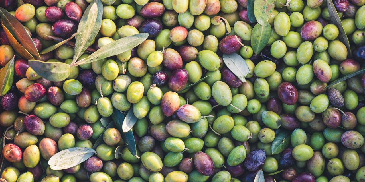 L'olio e il vino pugliese di Frisino conquista l'estero e sfiora il milione di fatturato: una storia di famiglia che vuole promuovere il territorio