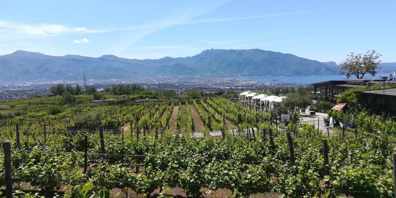 Sorrentino Vini: Produzione ed Enoturismo sul Vesuvio
