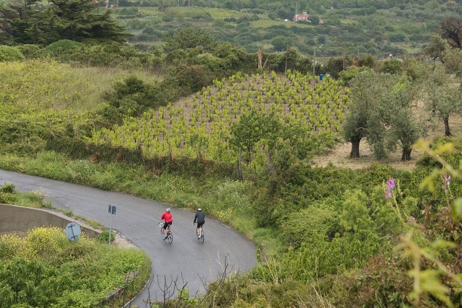 In Sardegna tre vini bianchi e il Pecorino Romano pedalano con BEST, nuova rete di bike – hotel