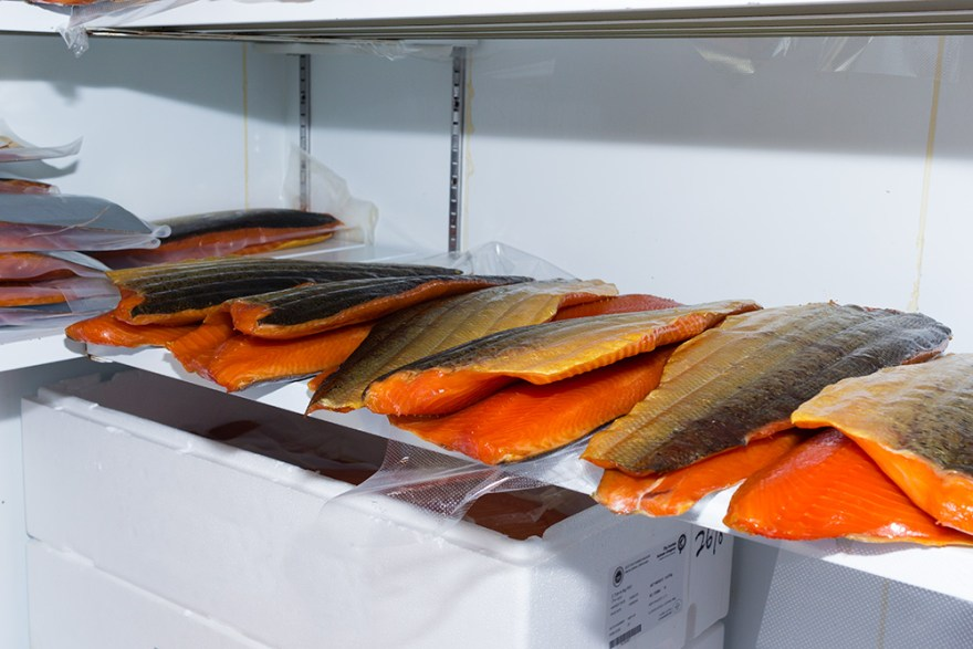 Smoked salmon chilling in the freezer at Uig Lodge in the Outer Hebrides of Scotland