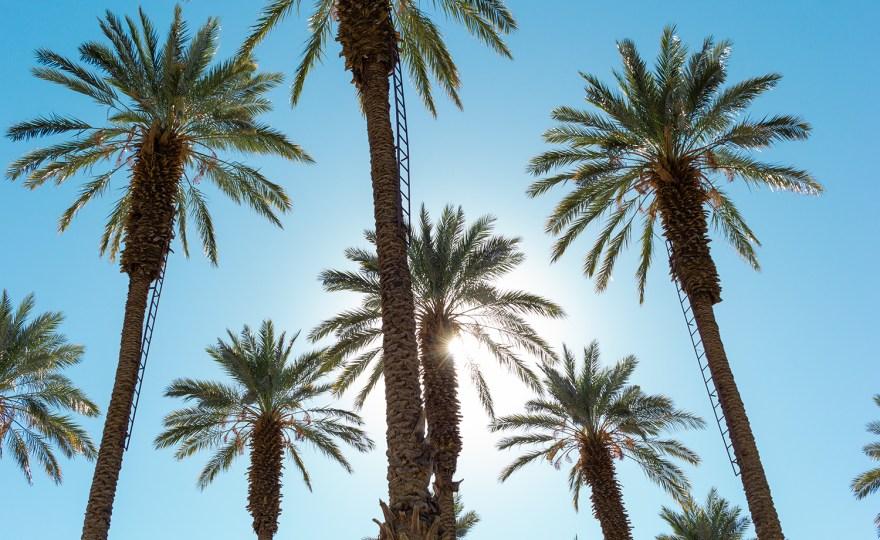 On Location: Coachella Valley Dates