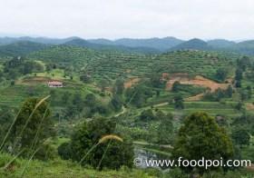 Orchard Heights Bungalow at Ladang Sabai Home Stay, Karak Pahang