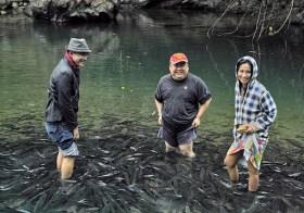 "Fish Spa ""Tagal"" Sg. Moroli, Kg. Luanti Baru, Ranau, Sabah"