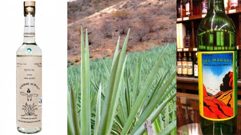Get To Know 5 Types Of Mezcal