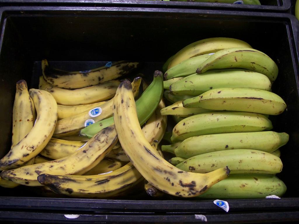 ¿Cuál es la diferencia entre los plátanos y los plátanos?
