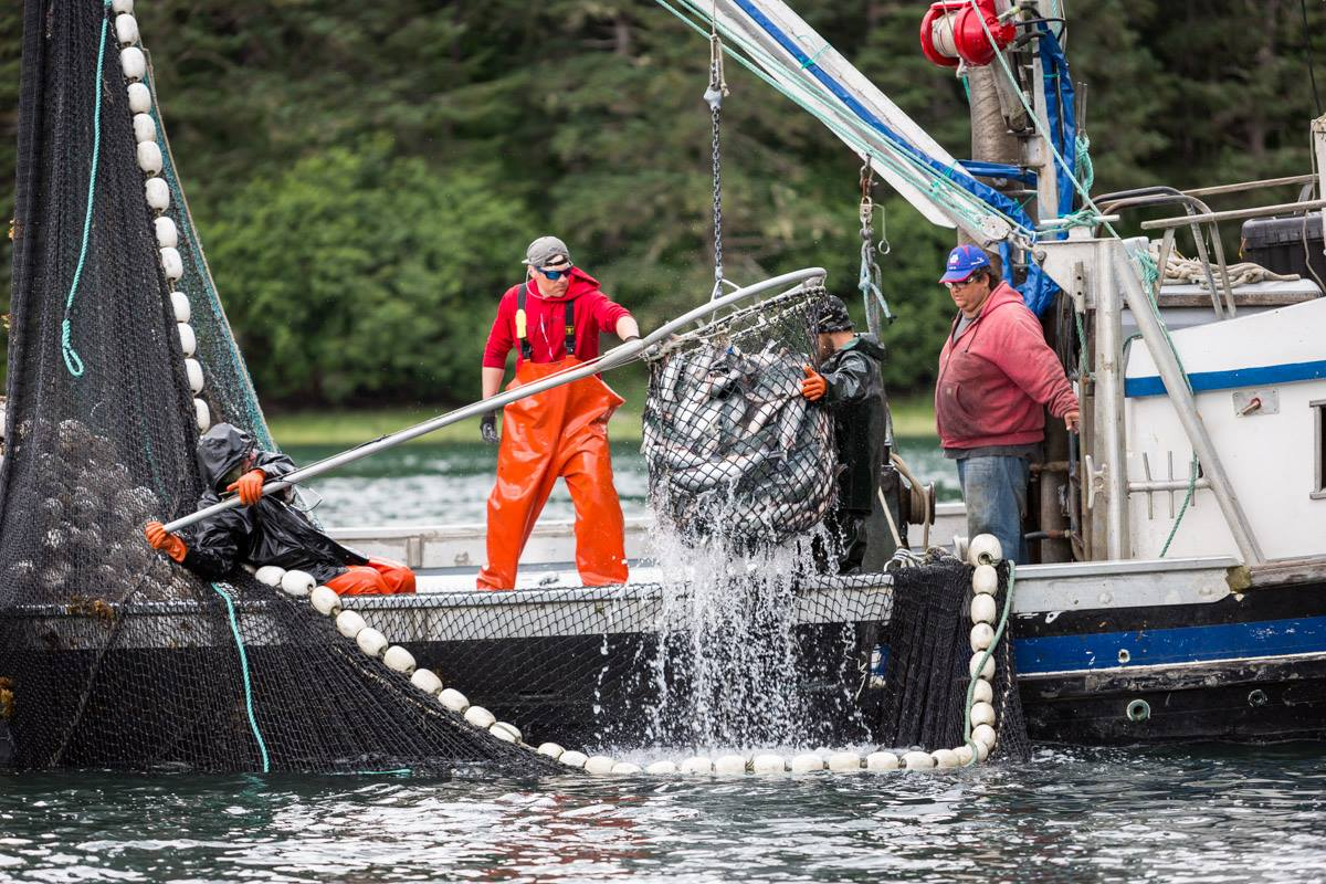Everything You Need To Know About Wild Alaskan Salmon