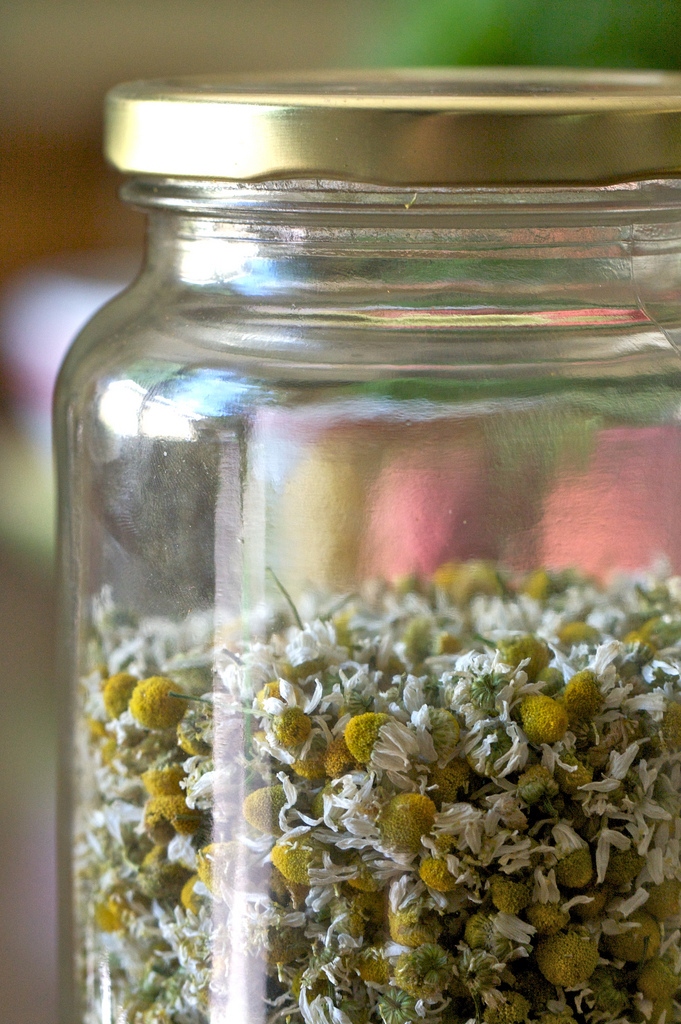 Chamomile by Susy Morris via flickr