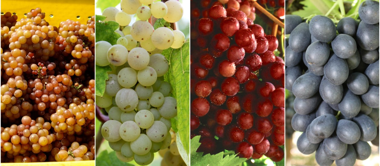 15 types of grapes to know eat and drink food republic - Table grapes vs wine grapes ...