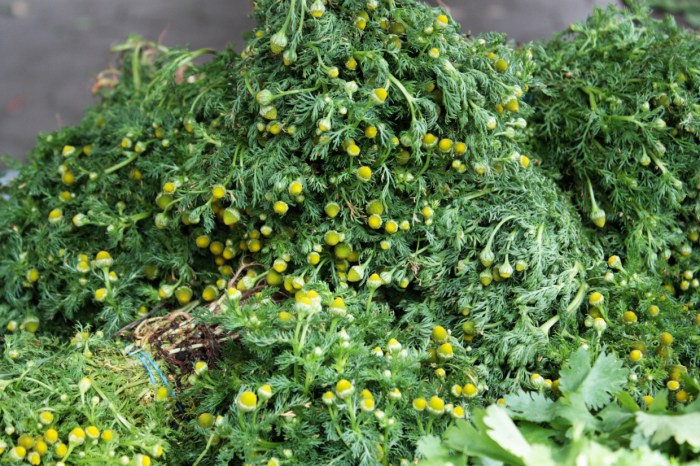 Union-Square-Farmers-Market-June-4-2014-Chamomile-from-S-and-SO-Produce-Farms-by-Linnea-Covington