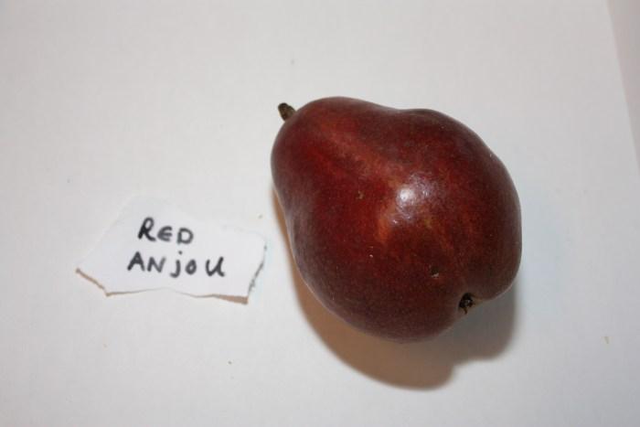 Red Anjou by Linnea Covington