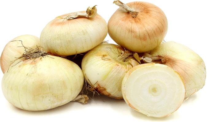 Bermuda Onion