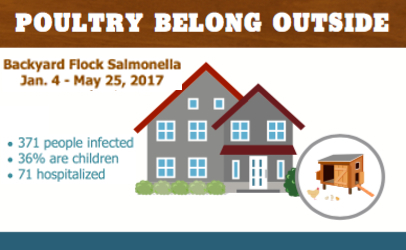 backyard flock Salmonella graphic June 2017