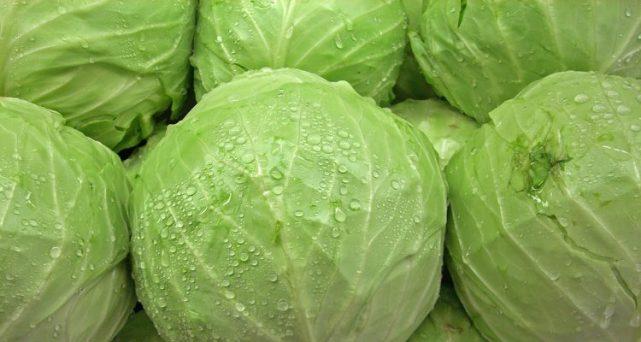 beda 4 jenis kubis dengan segudang kegunaan kesehatannya Beda 4 Jenis Kubis Dengan Segudang Kegunaan Kesehatannya cabbage 750x400