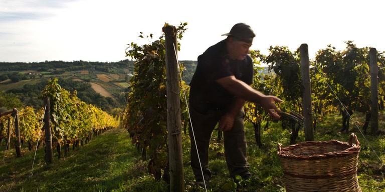 I produttori di Brunello creano una Fondazione per restituire al territorio parte dei profitti