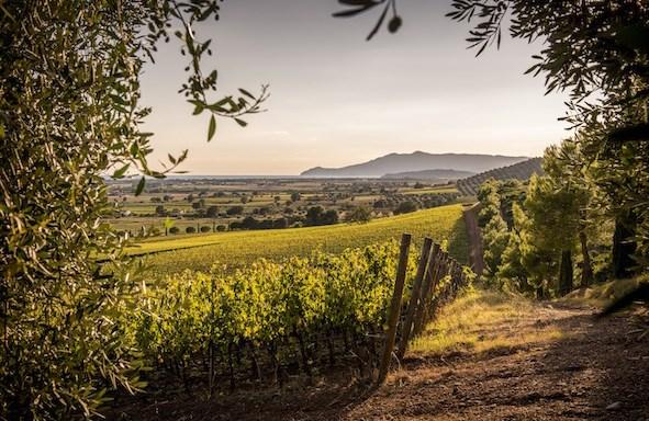 Wine/ San Valentino al Museo del Vino di Torgiano con festa medievale