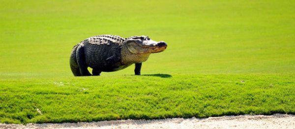 footballfrance-manaus-croconado-tornade-crocodiles