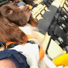 Where you can take your dog to football in Bracknell and Berkshire