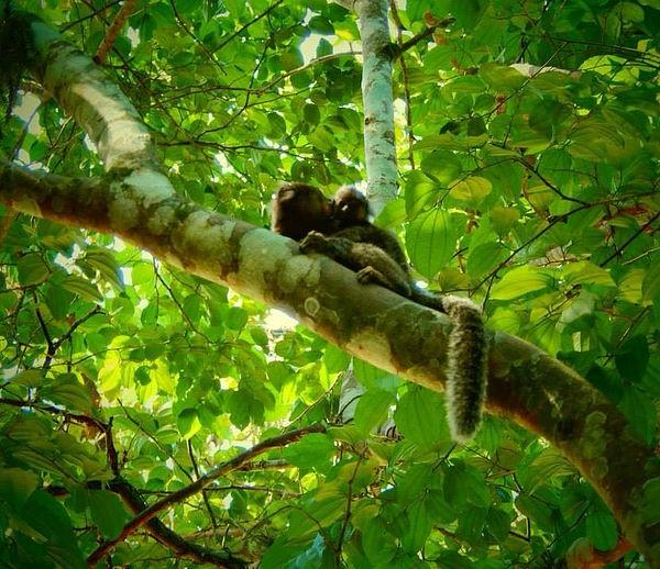 Monkeys in tree in Rio de Janeiro