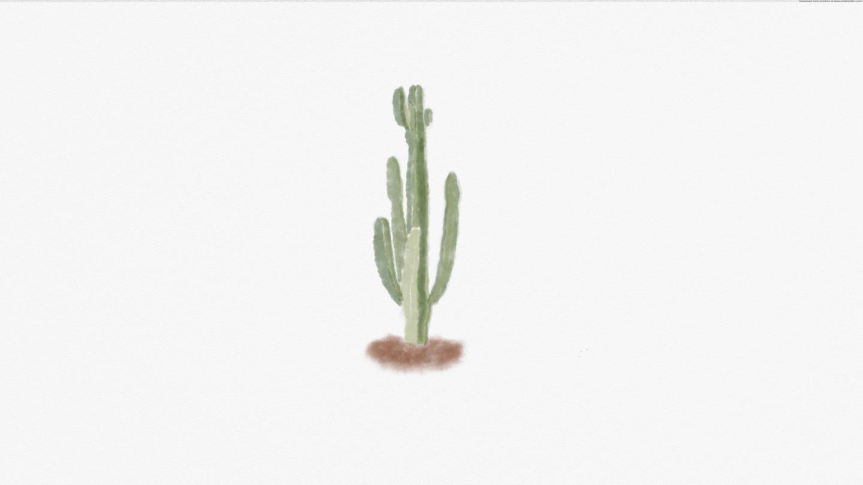 Sertão cactus watercolour