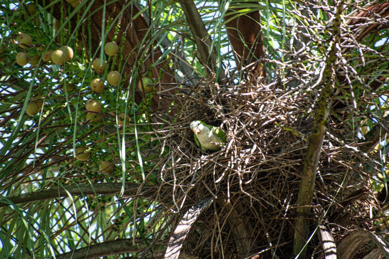 Parrot in tree in Brazil