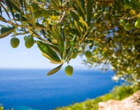 Akdeniz ve Zeytin