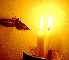 moth-lesson