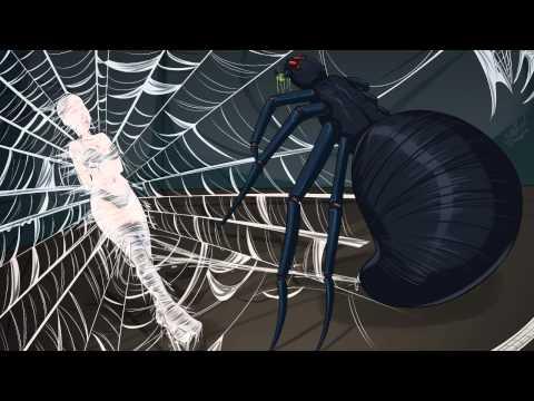 spider-web-7
