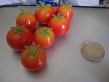 Tamaño del tomate chibikko