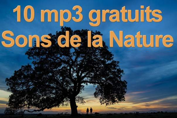 10-mp3-gratuits-sons-de-la-nature