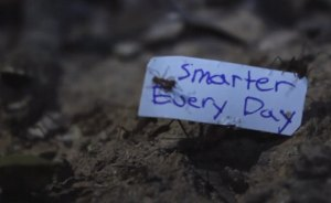 NATURE/SCIENCE GEEK: How to Get Ants to Carry Small Signs (Hint: It's Kinda Gross)