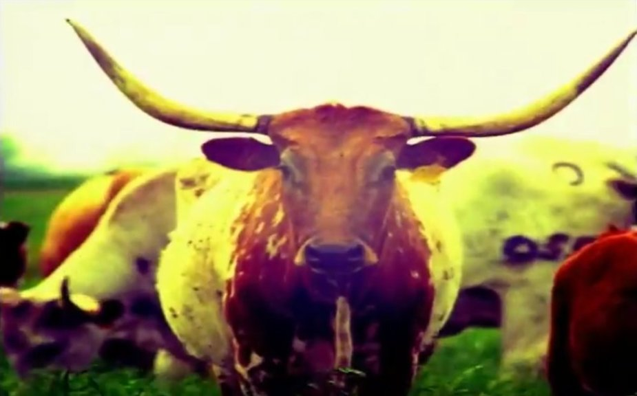 Texas Ford Steer Commercial