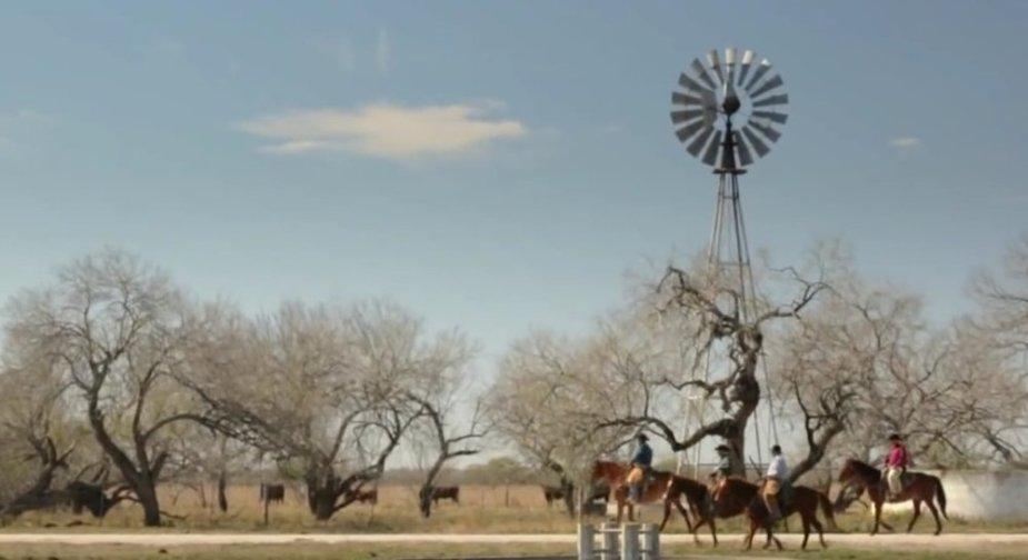 King Ranch Horses