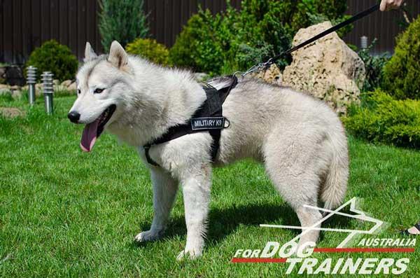 Buy Lightweight Nylon Dog Harness Training