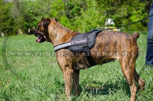 Boxer Dog Harness Reflexive