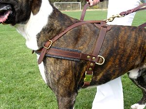 Tracking Pulling Agitation Leather Dog Harness For Boxer