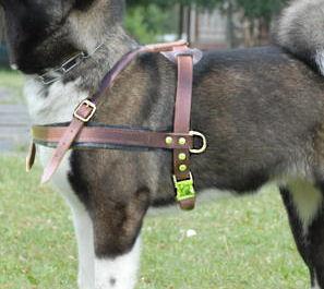 Alaskan Malamute Tracking Pulling Leather Dog Harness H5