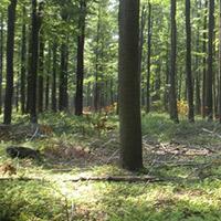 Timberland Appraisal Services