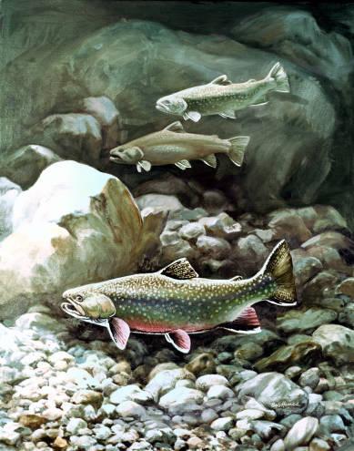 Fliegenfischen Robert W Hines Bachsaibling