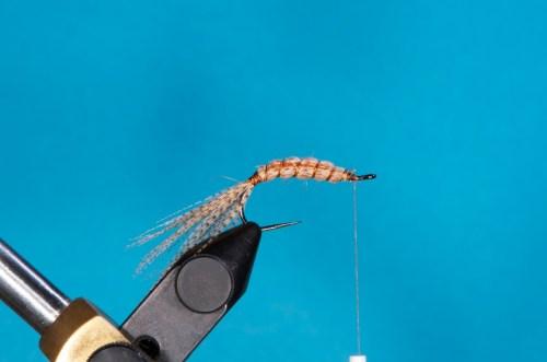Fibern nach hinten streifen, dabei gleichmäßig um den Dubbingkörper verteilen, mit dem Rippungsfaden festlegen und nach vorne rippen. Mit dem Bindefaden abfangen.