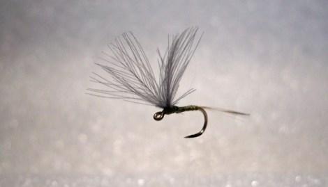 Forelle Äsche Fliegenbinden Blue Winged Olive BWO 3