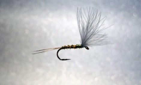 Forelle Äsche Fliegenbinden Blue Winged Olive BWO 5