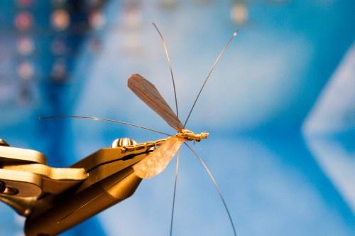 Forelle Äsche Fliegenbinden Schnake Crane Fly Daddy Long Legs20